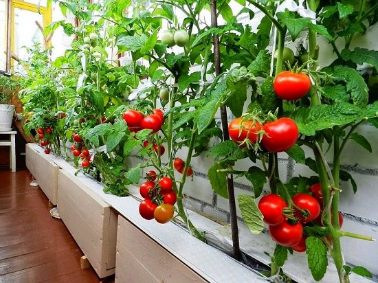 Set up a vegetable garden in your balcony